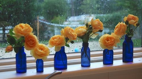 Rainy Day photo by FarmerJulie