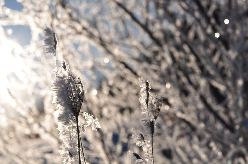 Winterwonercompassion 006