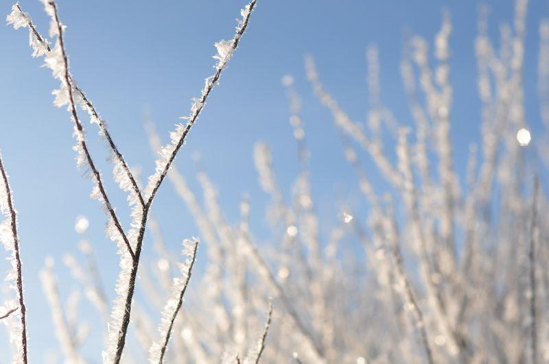 Winterwonercompassion 015