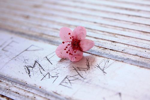 Little Flower photo by D Sharon Pruitt (flickr)