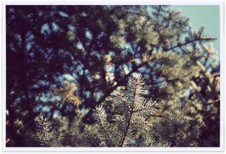 Tree - 2