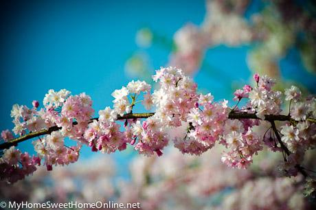 100403_SpringWalk_052