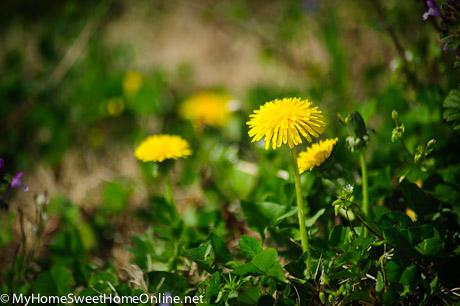 100403_SpringWalk_012