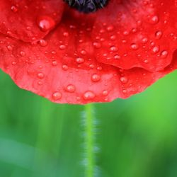 Rain and flower photo by jenny downing (flickr)