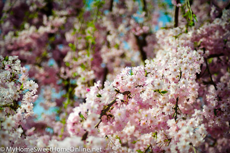 100403_SpringWalk_054