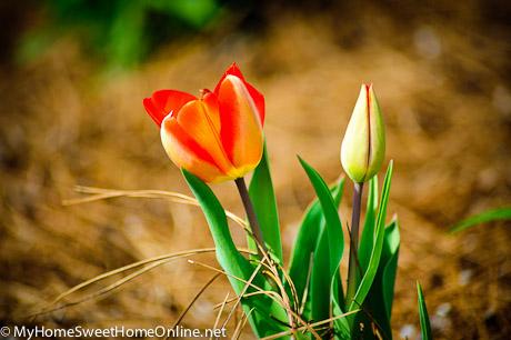100403_SpringWalk_038