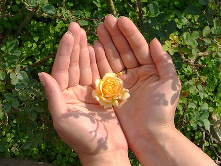 Flower in hands